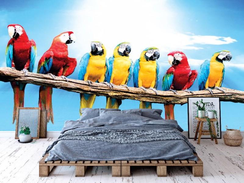 Fototapet flock av ara