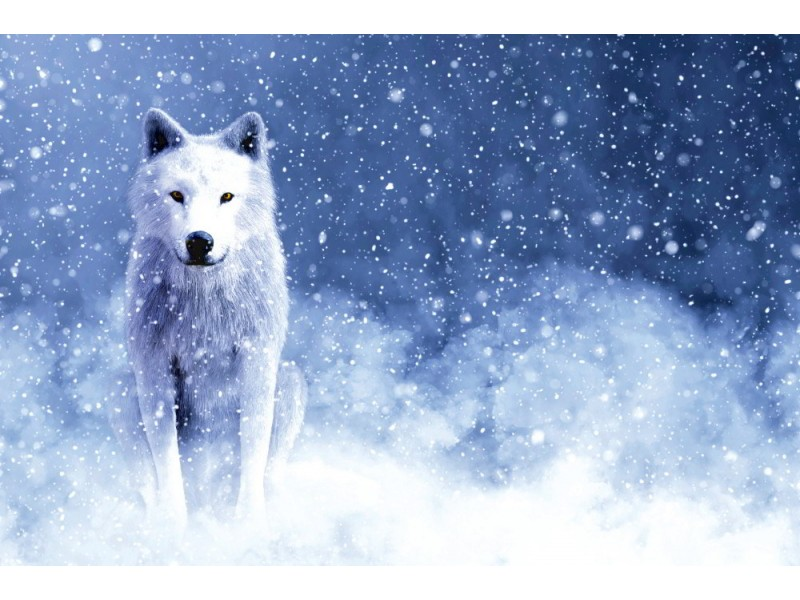 Fototapet majestätisk vit varg
