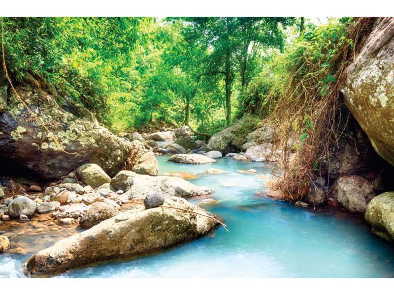 Fototapet regnskogström på Bali