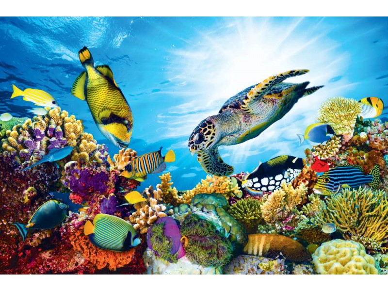 Fototapet färgrikt korallrev med fiskar och havssköldpaddan