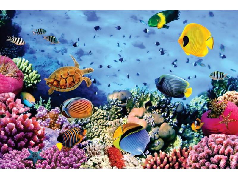Fototapet korallkoloni i Röda havet