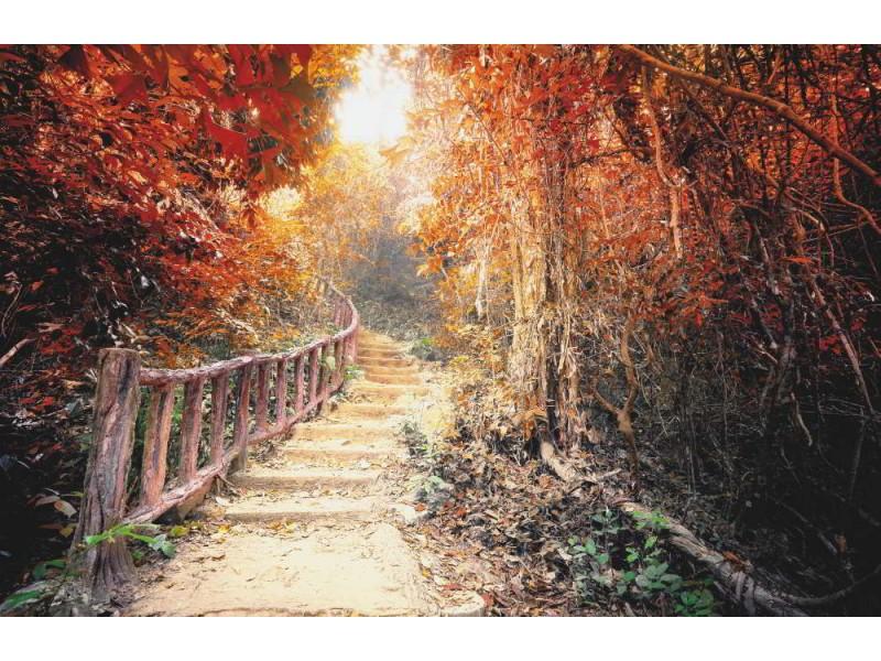 Fototapet fantasiskog på hösten