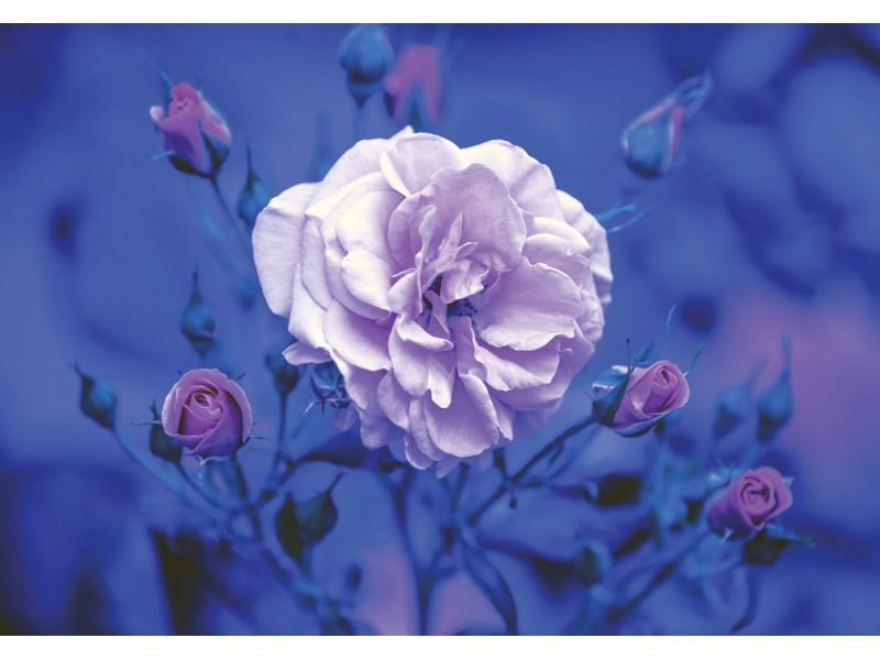 Fototapet blå vintage ros (121395400)