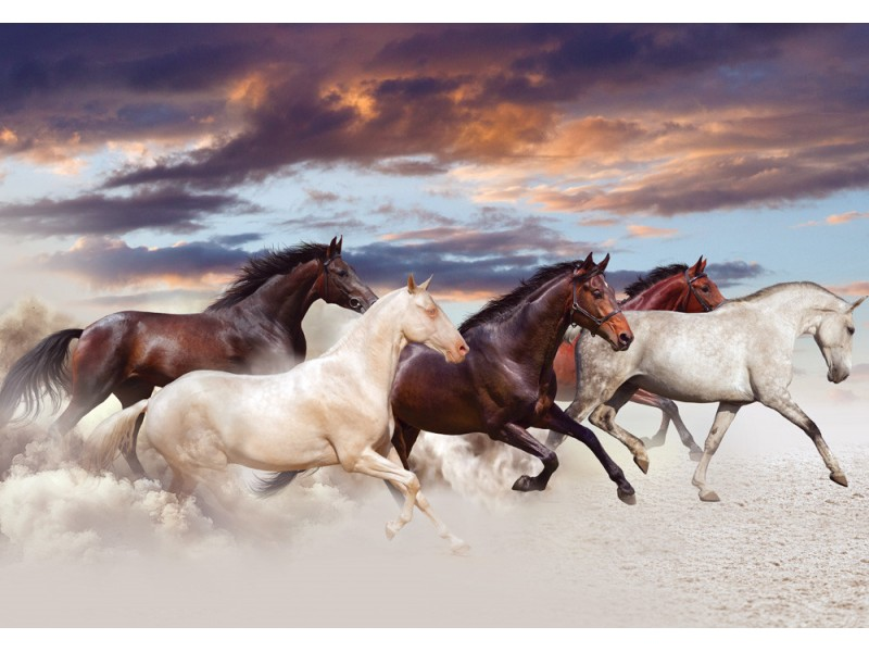 Fototapet fem hästar kör galopp i öknen vid solnedgången (36685830)