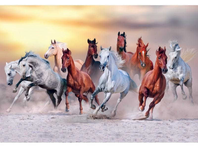 Fototapet hästar kör galopp i damm mot solnedgånghimmel (62087491)
