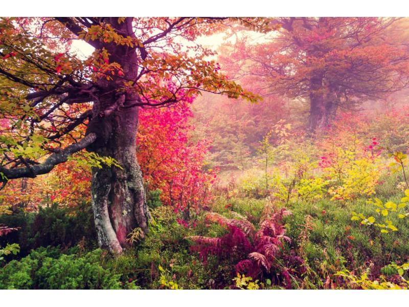 Fototapet Majestic Carpathian Landscape