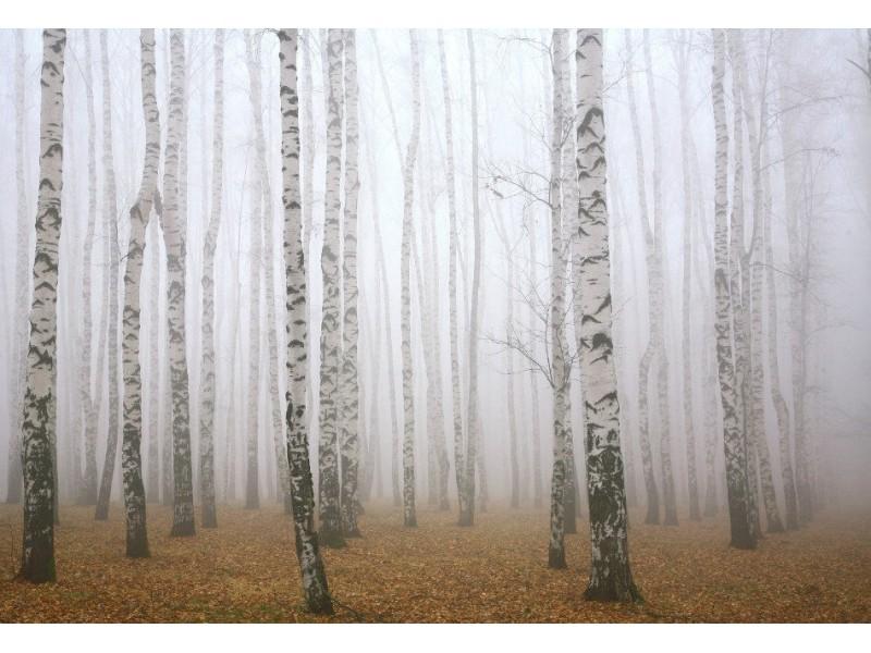 Fototapet Morning Mist In Autumn