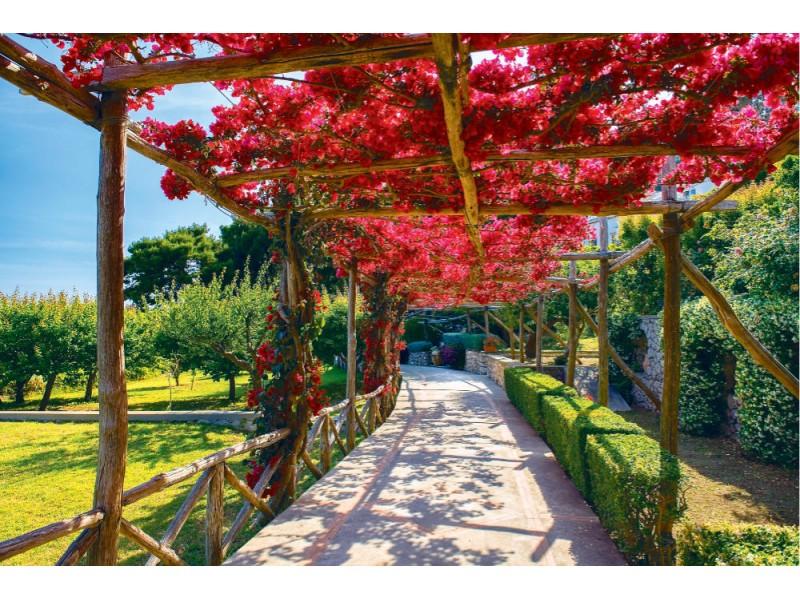 Fototapet pittoresk väg på Capri (79988210)