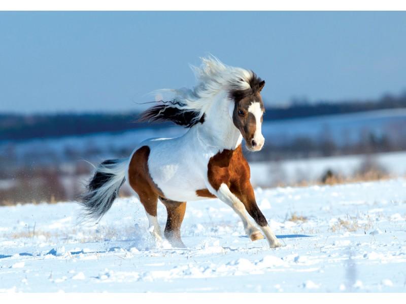 Fototapet litet hästspring i snön i fält (32874312)