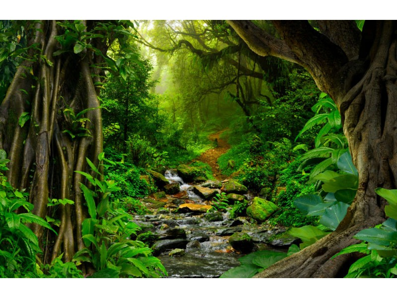 Fototapet Tropical Jungle With River