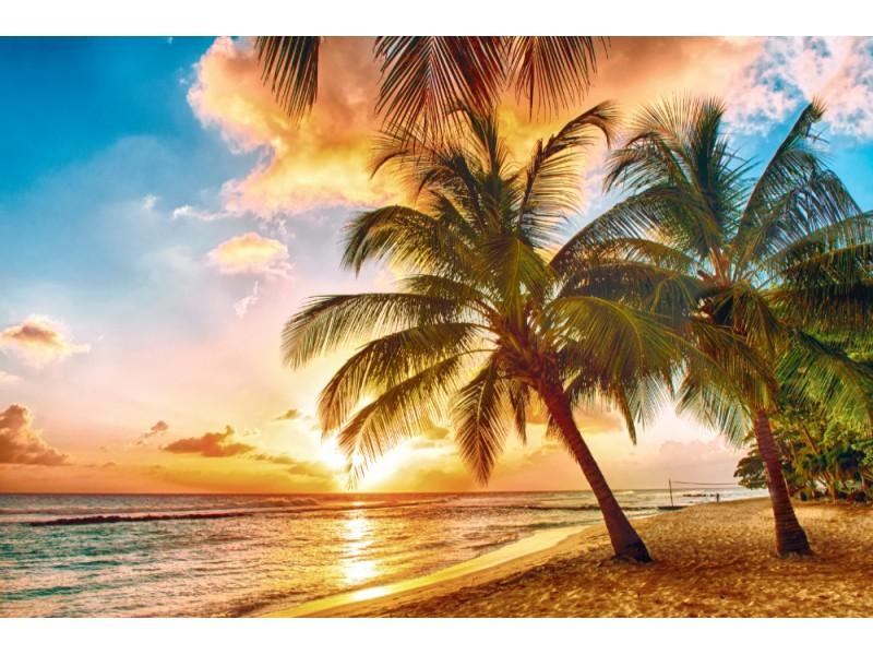 Fototapet utsikt över solnedgången och palmerna på den vita stranden (Barbados)