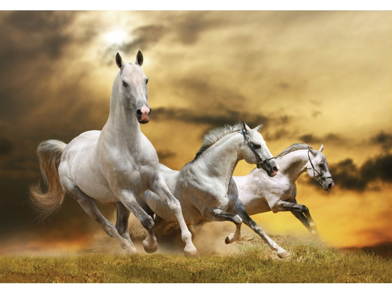 Fototapet vita hästar (12534938)